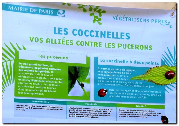 coccinelle_g